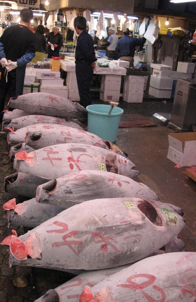 Frozen Tuna at Tokyo Fish Market 2009